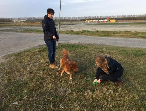 Hondenkaart in Nobelhorst